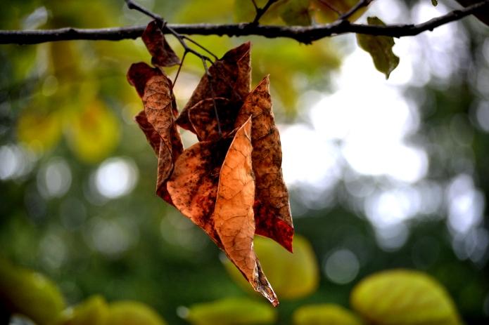 Fall_Kiss