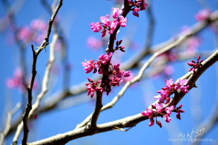 blossom_final_1