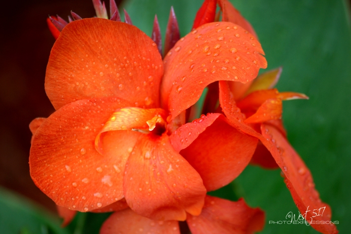 Orange_Bloom_2