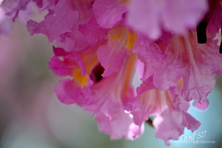 Spring_Final_02