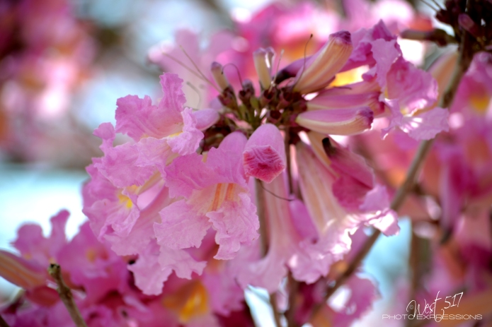 Spring_Final_03
