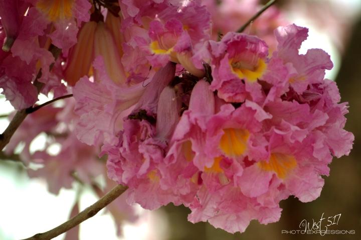 Spring_Final_04