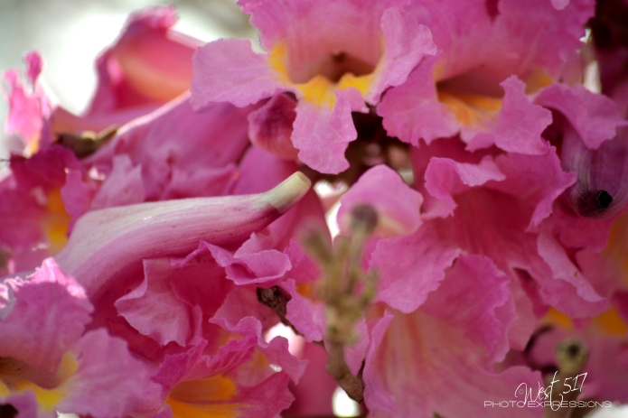 Spring_Final_1