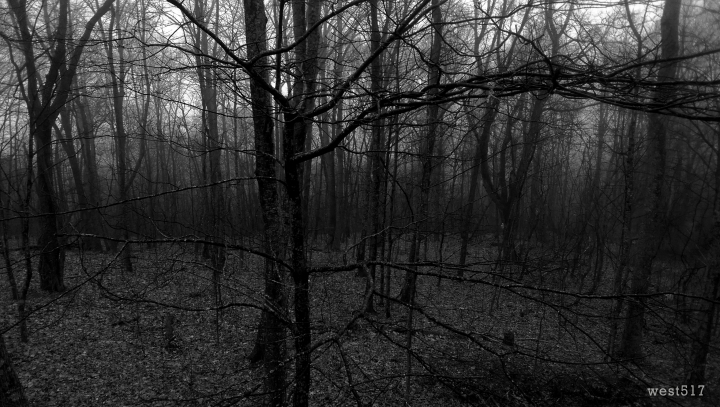 woods_final